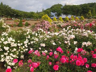花フェスタ記念公園「バラ園」岐阜県可児市